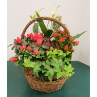 European Basket Garden 8""