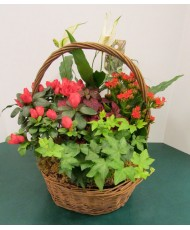European Basket Garden 10""