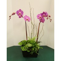 "European Orchid Garden 9"""